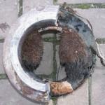 Projekt C347:<br />Wurzeleinwuchs in Abwasserleitungen – passive Schutzmaßnahmen