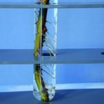 Rohre vor Wurzeln schützen – und Wurzeln vor Rohren