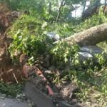Sturmtief Ela und die Folgen: <br/>Wurzeln und Rohre können sich vertragen