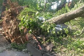 auf ein Auto gestürzter Baum