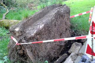Wurzeln eines umgestürzten Baums