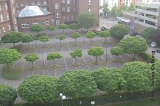 Parkplatz mit Bäumen gleichen Alters aber stark unterschiedlicher Größe