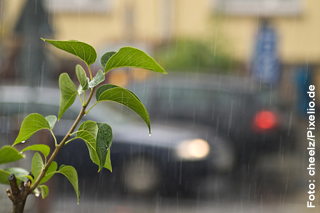 Regen, Straße, Stadtgrün